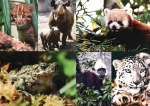 Artenschutzpostkarten der GDZ e.V.