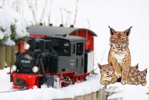 GDZ-Luchs im Schnee (Foto: Lothar Teichmann)