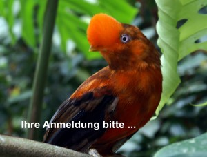 Felsenhahn im Zoo Wuppertal (Foto: Lothar Teichmann)
